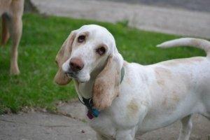 Staubsauger stinkt - Hund lässt ohren hängen